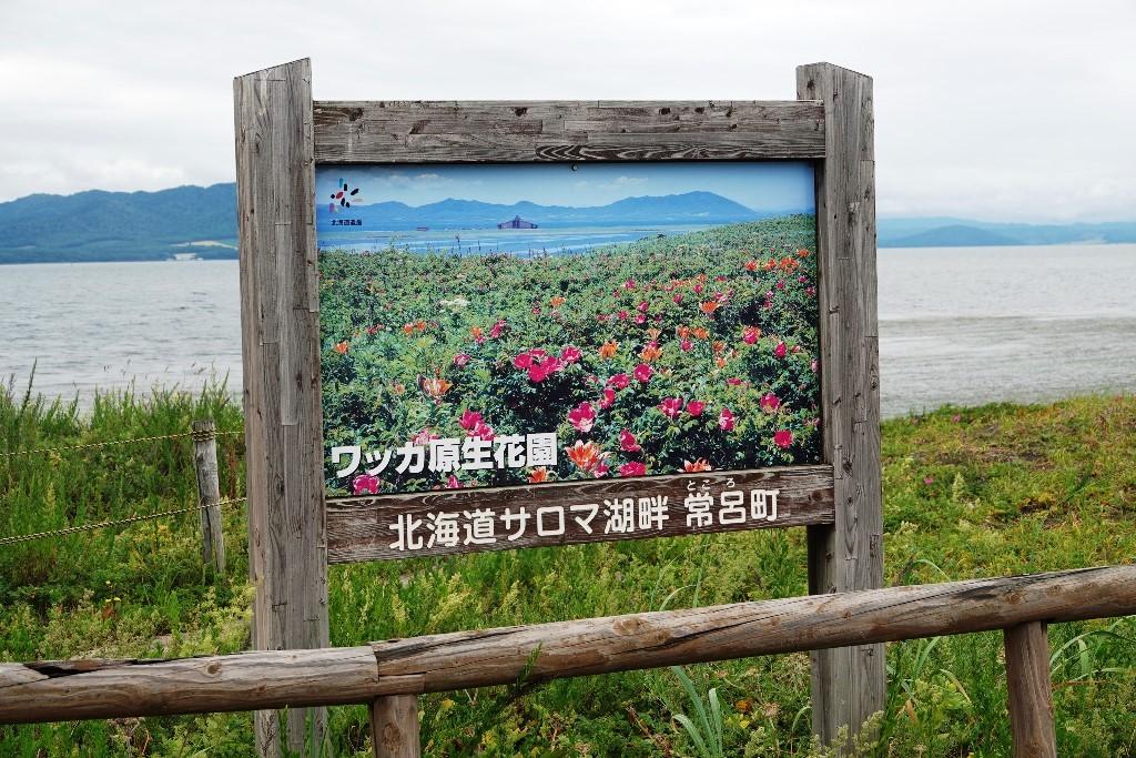 北海道探鳥地放浪の旅  画像編_b0227552_19311487.jpg