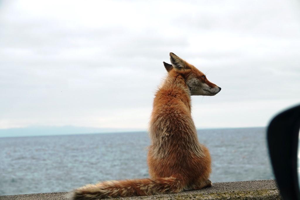 北海道探鳥地放浪の旅  画像編_b0227552_19404242.jpg