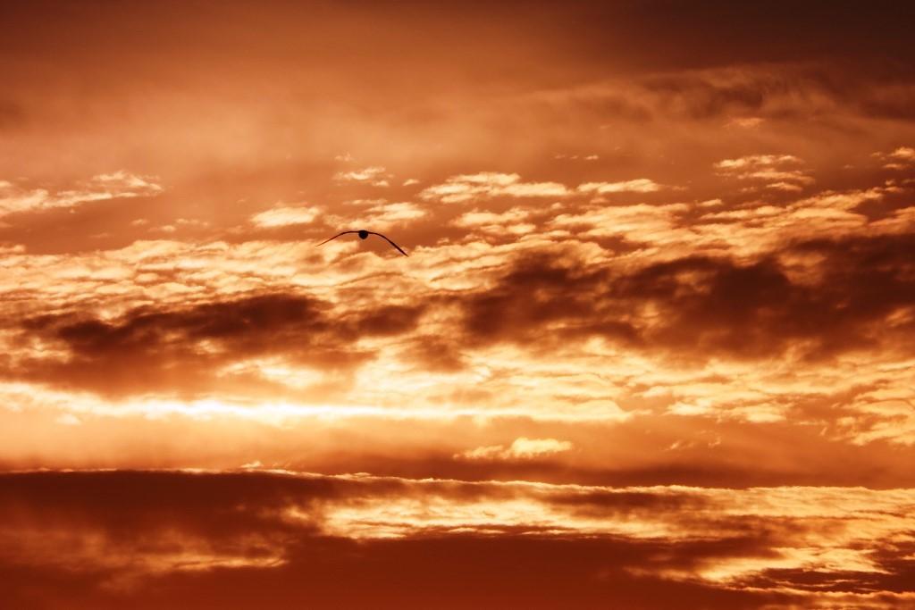 北海道探鳥地放浪の旅  画像編_b0227552_19404498.jpg