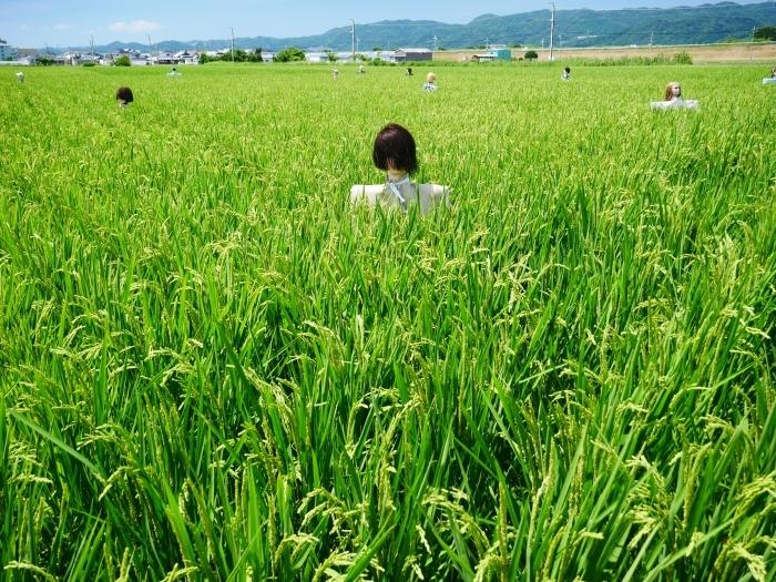 田園風景・案山子  2020-08-23 00:00_b0093754_23143440.jpg