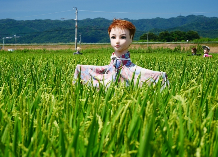 田園風景・案山子  2020-08-23 00:00_b0093754_23145951.jpg
