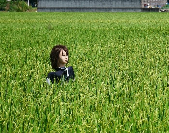 田園風景・案山子  2020-08-23 00:00_b0093754_23152827.jpg