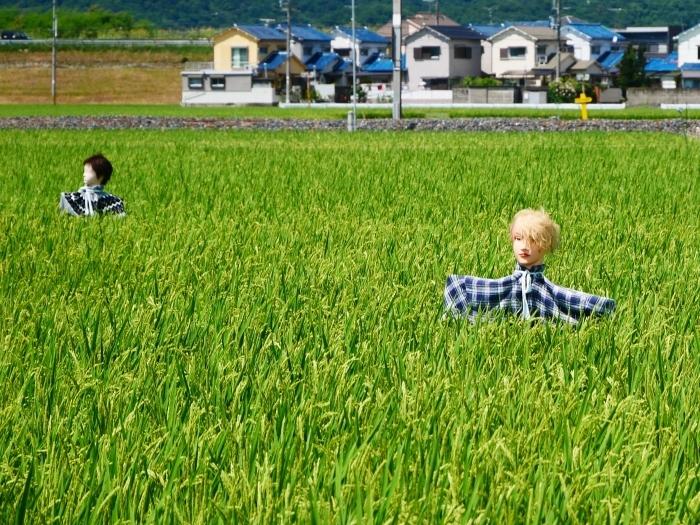 田園風景・案山子  2020-08-23 00:00_b0093754_23160708.jpg