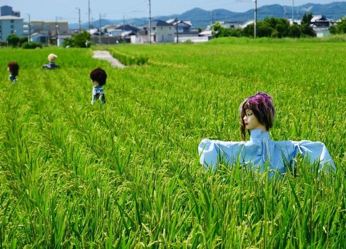 田園風景・案山子  2020-08-23 00:00_b0093754_23162808.jpg