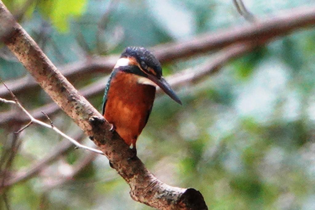 野鳥トレ 220 再度公園~森林植物園_b0227552_20555892.jpg