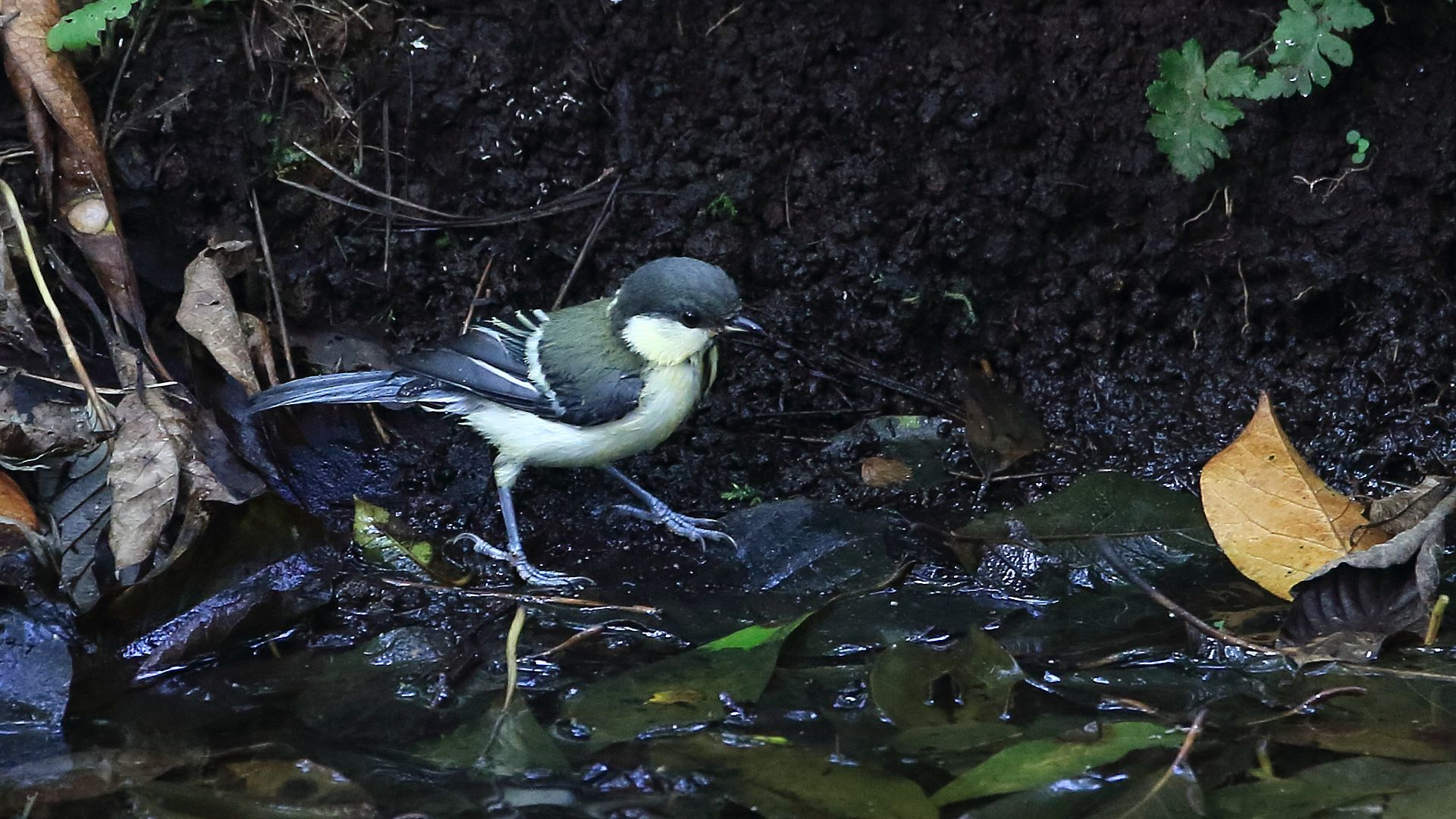 シジュウカラ幼鳥も_f0105570_21220974.jpg