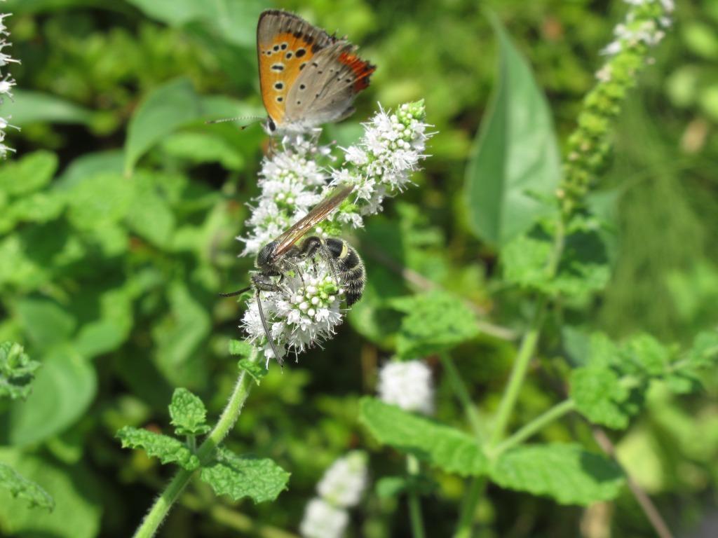 夏のお花と昆虫たち_d0384190_10581953.jpg