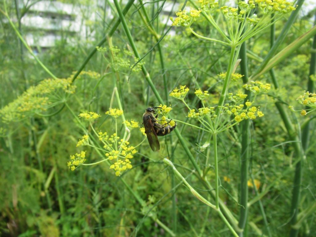 夏のお花と昆虫たち_d0384190_10581986.jpg