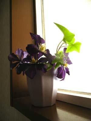 テッセンが咲いていた庭_d0206920_15163441.jpg