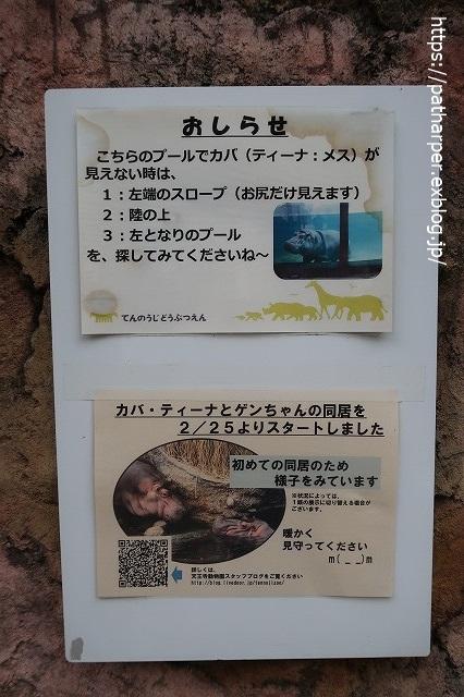 2020年7月 天王寺動物園 その2 フンボ換羽中_a0052986_7554114.jpg