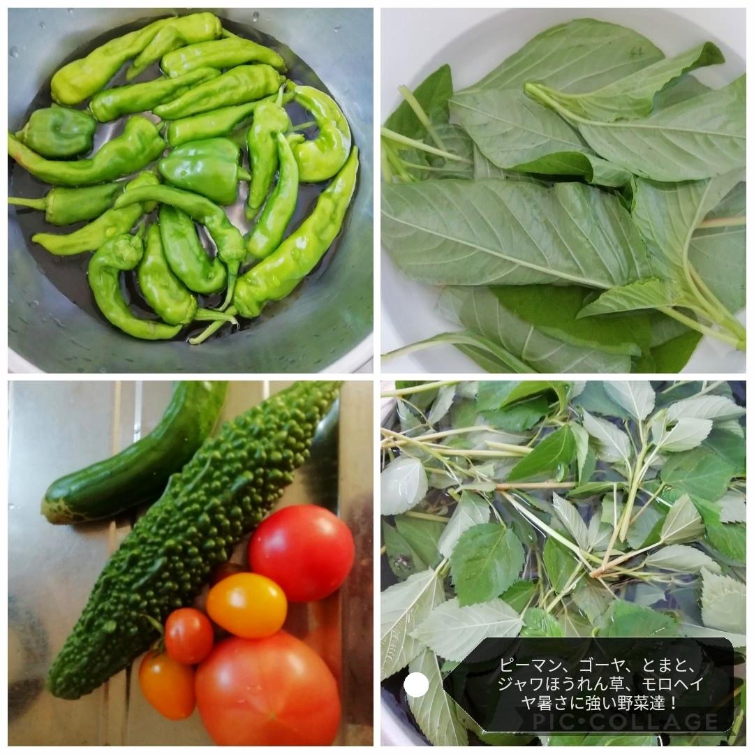 夏野菜でスタミナおかず_b0235586_12070423.jpg