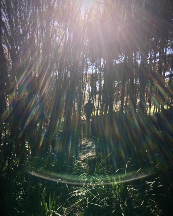 インターネットのデメリット/  A Walk Passed The Fairy Paddock_e0310424_12482408.jpg