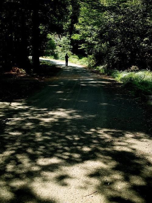 夕顔とわたし・・・くつきの森で薪ネット作業例会_d0005250_180727.jpg
