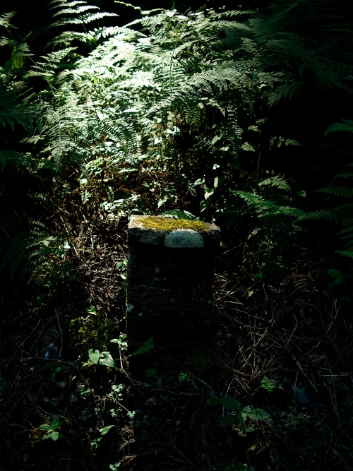 夕顔とわたし・・・くつきの森で薪ネット作業例会_d0005250_1811296.jpg