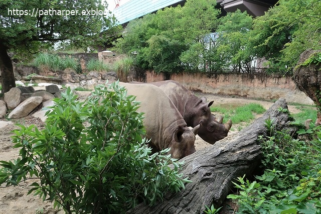 2020年7月 天王寺動物園 その2 フンボ換羽中_a0052986_7471267.jpg