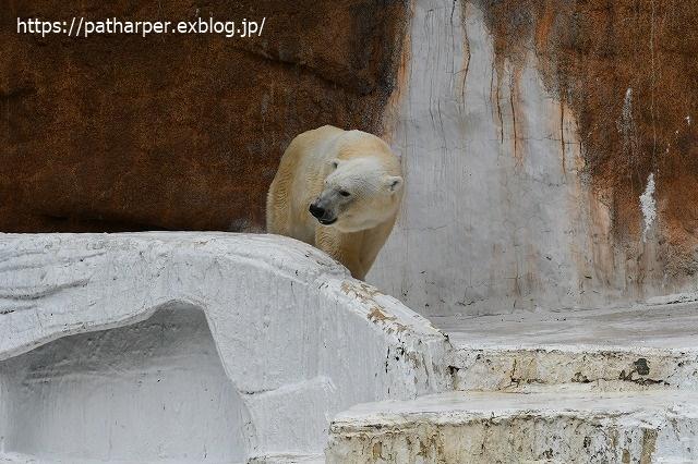 2020年7月 天王寺動物園 その2 フンボ換羽中_a0052986_753989.jpg