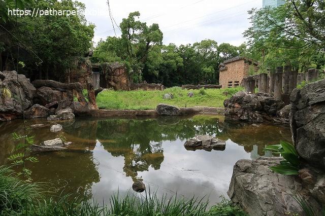 2020年7月 天王寺動物園 その2 フンボ換羽中_a0052986_81114.jpg