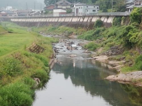 2020/8/22     水位観測  (槻の木橋より)_b0111189_05493195.jpg