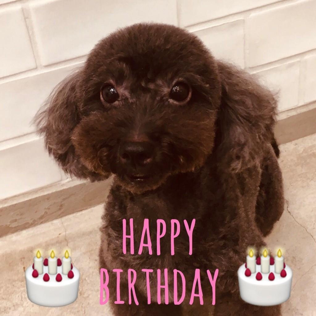 ☆ Happy Birthday ・ テンちゃん ☆_d0060413_16201646.jpg