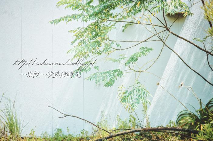 真夏の木陰。_f0235723_19391174.jpg