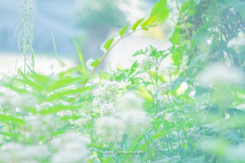 草むらも。_b0304227_16202231.jpg