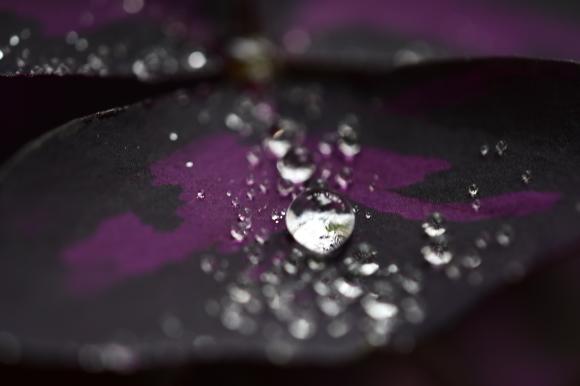 水滴(3)_c0093046_16360424.jpg