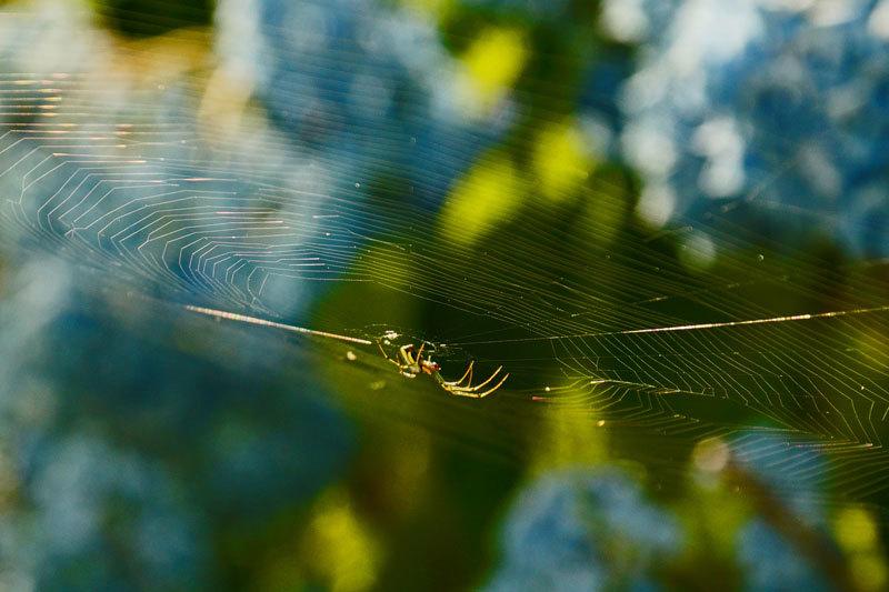 虹色の蜘蛛の巣_d0162994_10131884.jpg