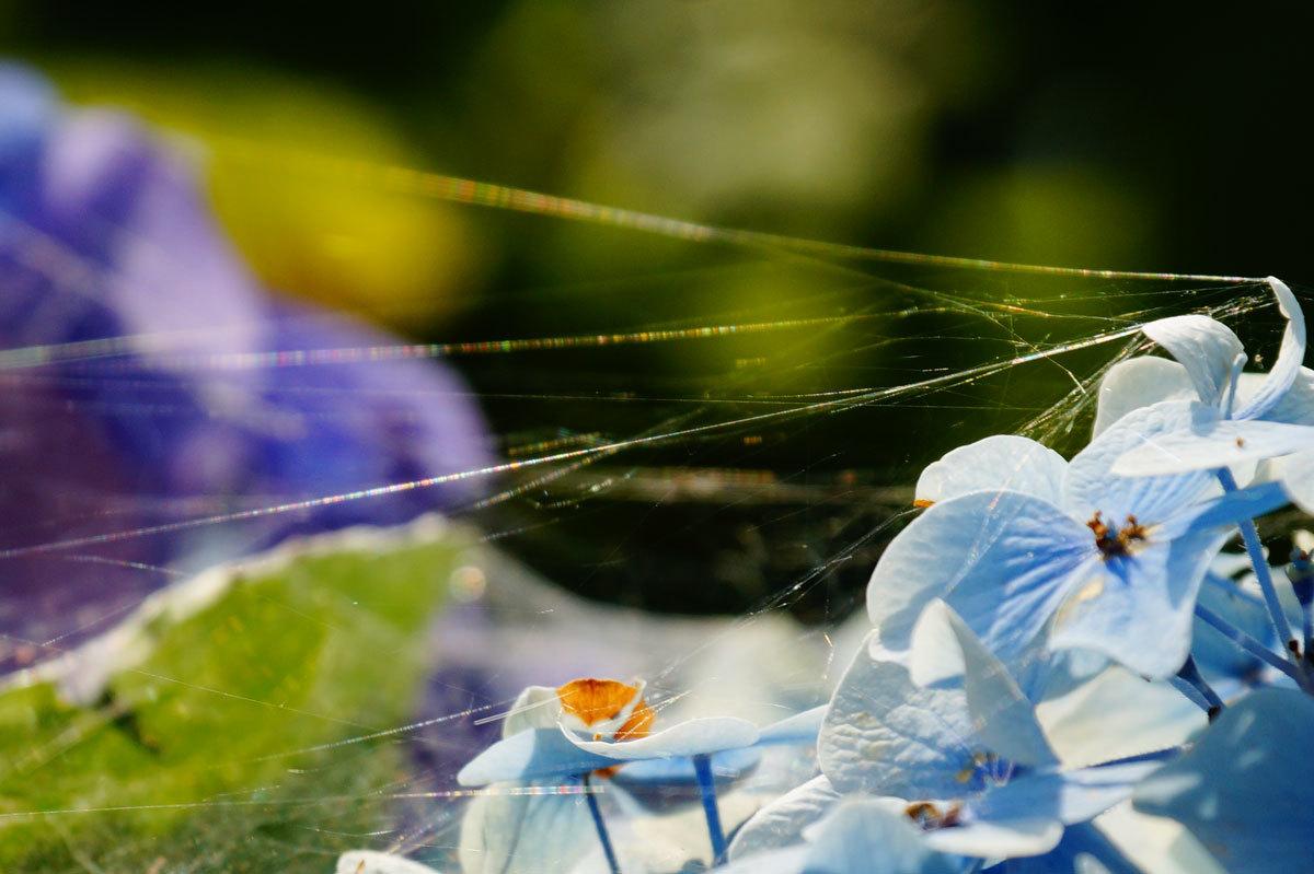 虹色の蜘蛛の巣_d0162994_10134509.jpg