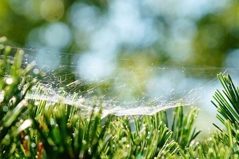 虹色の蜘蛛の巣_d0162994_10135863.jpg