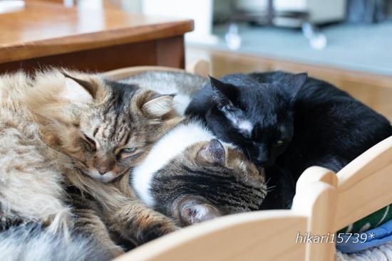 人気の猫ベッドと猫枕_e0364523_19310614.jpg