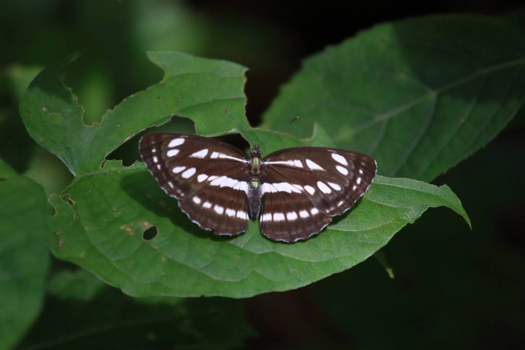 蝶とトンボ_e0403850_22372356.jpg