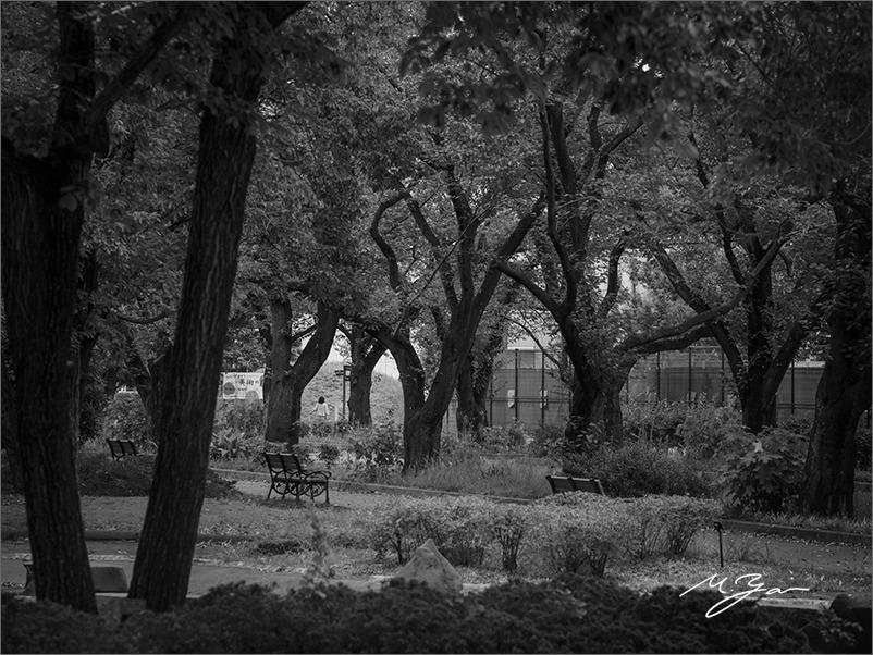 夏の終わりの公園で_a0161380_03334488.jpg