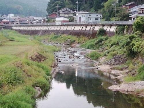 2020/8/24     水位観測  (槻の木橋より)_b0111189_05552290.jpg