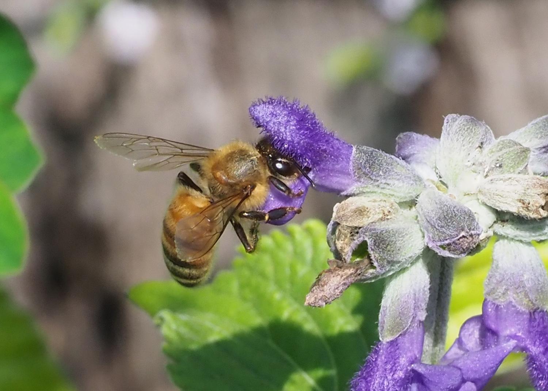 花バチ_e0254493_2233699.jpg