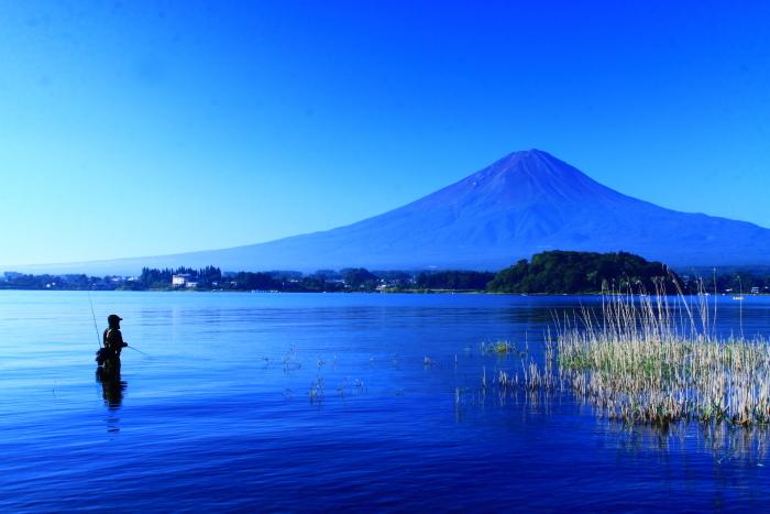 令和2年8月の富士(4) 河口湖の花と富士 _e0344396_16073196.jpg