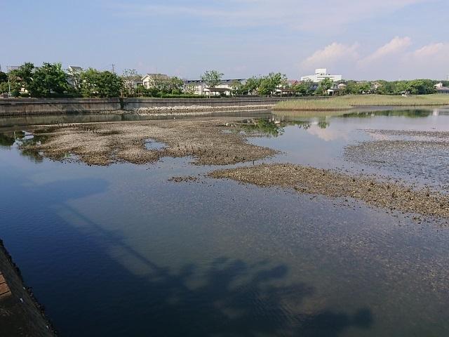 谷津干潟の環境変化・・・アオサは減少、ゴカイ類やシギ・チドリ類は?_c0236527_01012912.jpg