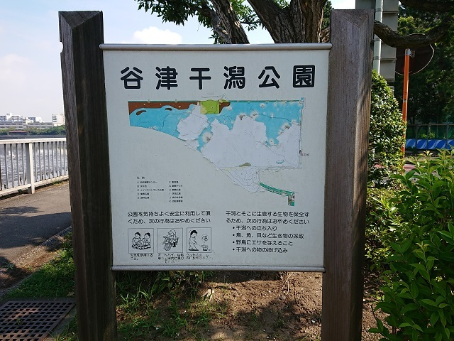 谷津干潟の環境変化・・・アオサは減少、ゴカイ類やシギ・チドリ類は?_c0236527_01014079.jpg