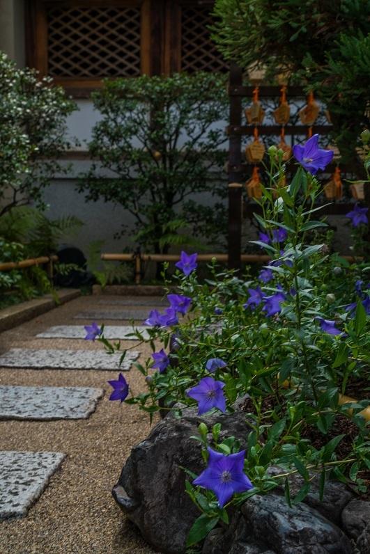 清明神社の桔梗_e0363038_12410772.jpg