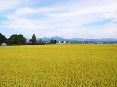 七城米 長尾農園 美しすぎる田んぼ出穂の様子(2020年) _a0254656_18302102.jpg