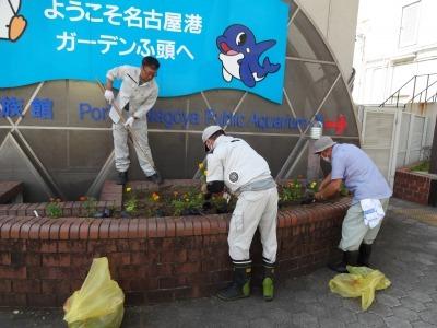 ガーデンふ頭総合案内所前花壇の植替えR2.8.24_d0338682_09105864.jpg