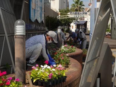 ガーデンふ頭総合案内所前花壇の植替えR2.8.24_d0338682_09112128.jpg