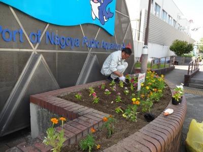 ガーデンふ頭総合案内所前花壇の植替えR2.8.24_d0338682_09113157.jpg