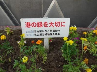 ガーデンふ頭総合案内所前花壇の植替えR2.8.24_d0338682_09122919.jpg