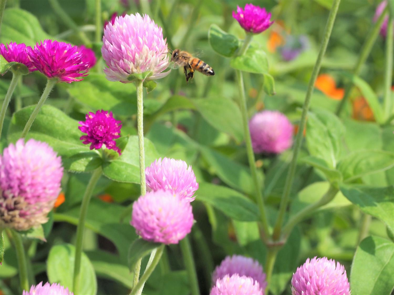 花バチ_e0254493_21584159.jpg