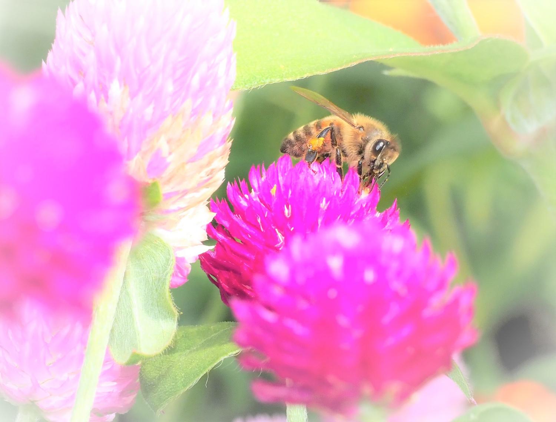 花バチ_e0254493_21591411.jpg