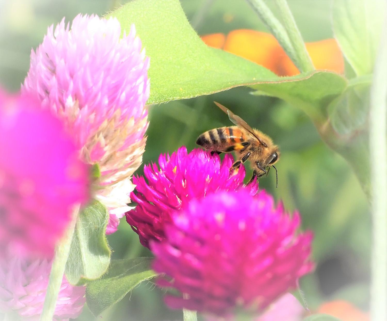 花バチ_e0254493_21593097.jpg
