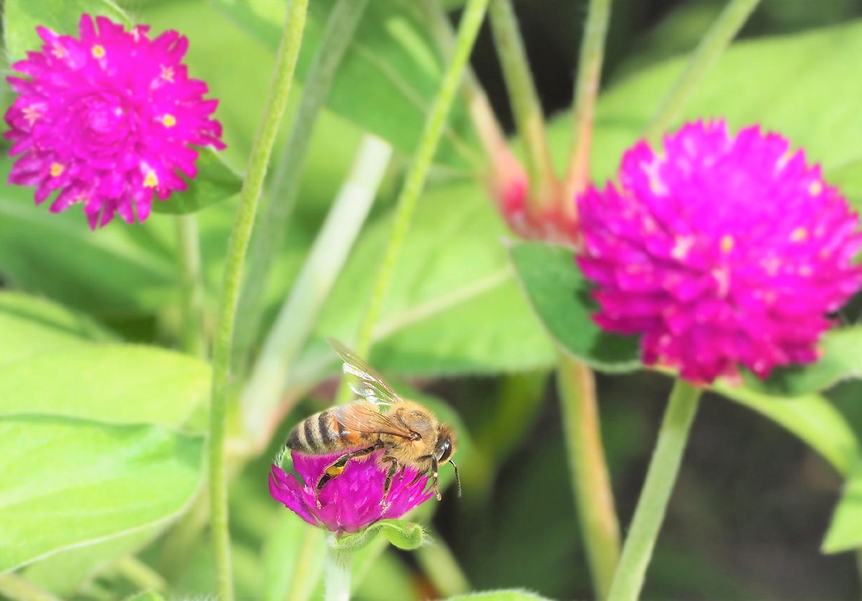 花バチ_e0254493_21595271.jpg