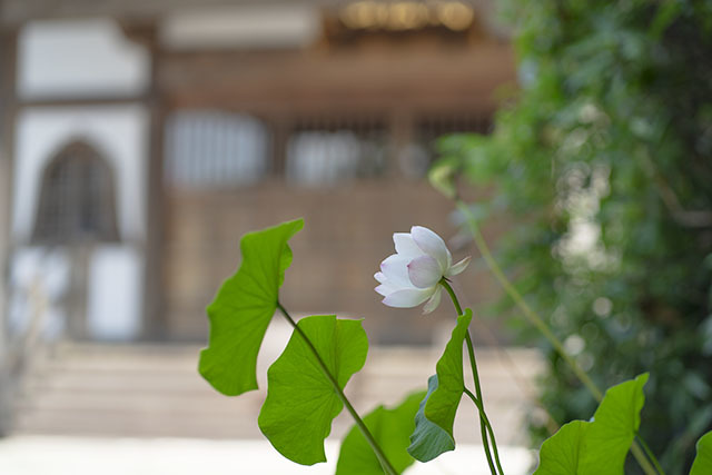 二伝寺の夏_b0145398_21425568.jpg