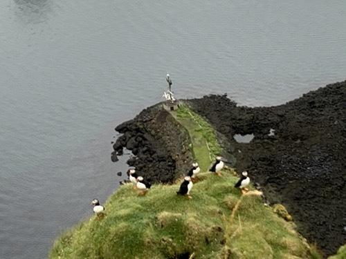 Zoom オンライン・セミナー:写真で探訪、ヘイマエイ島ーパフィンも可愛い!グルメもあり!_c0003620_09425946.jpeg