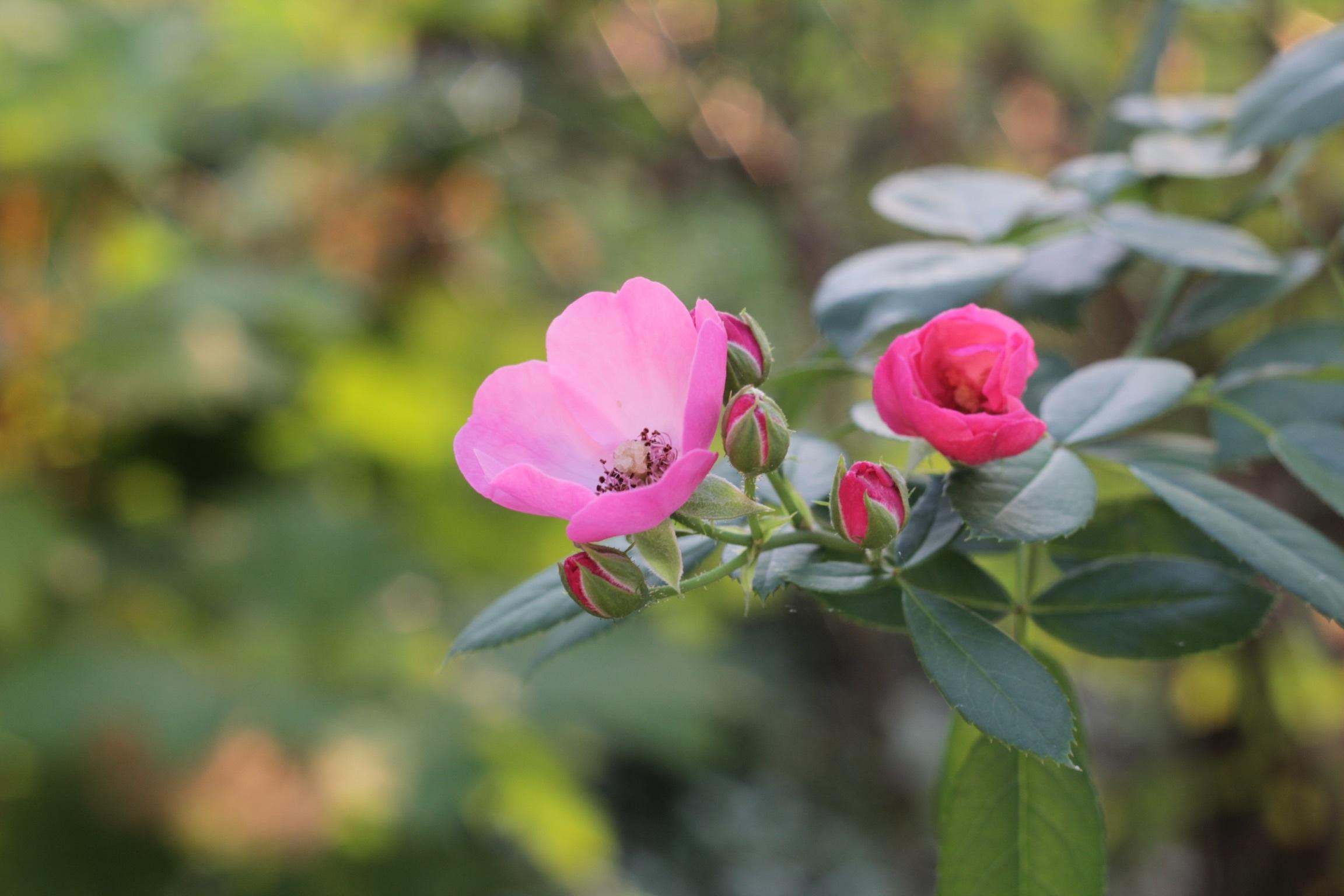朝の庭_b0132338_08045242.jpeg